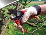 Ножницы для сельского хозяйства